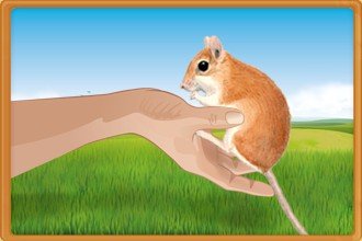 Take care of the rodents belonging to other breeders in your fan club and help them grow and progress every day.